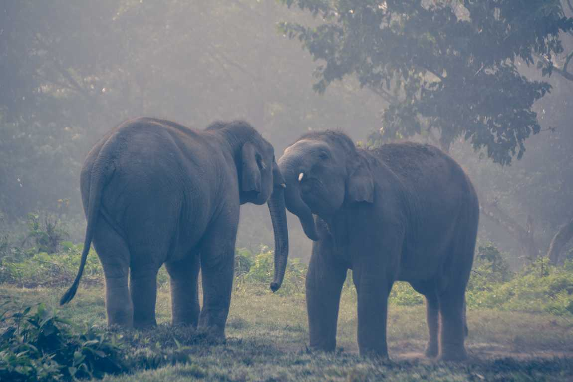 Chitwan Elephant Sanctuary