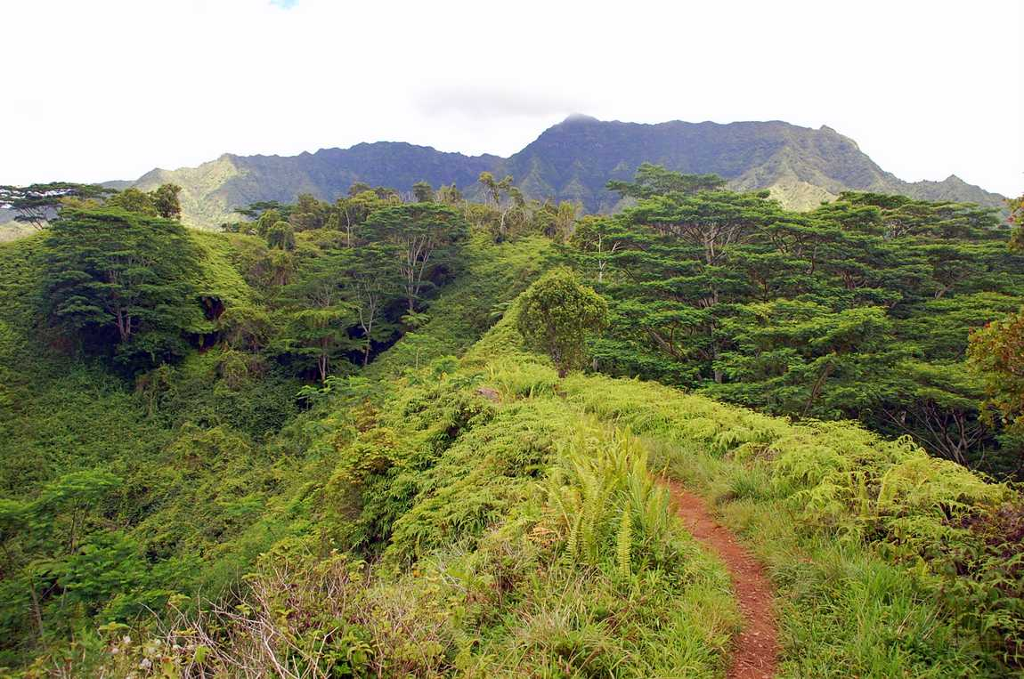 Kuilau Rridge trail
